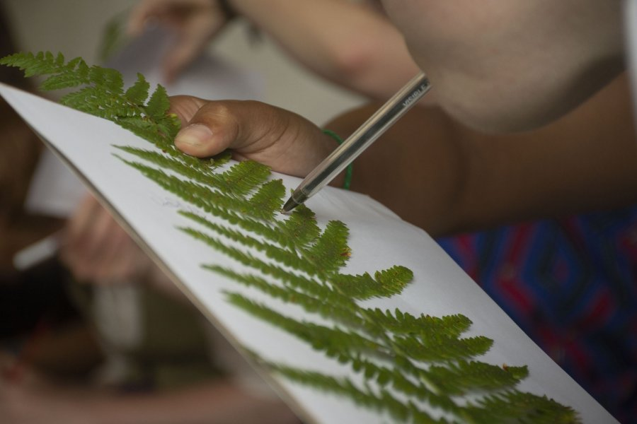 A fern is held in place on top of a piece of a paper while somebody draws around it with a pen